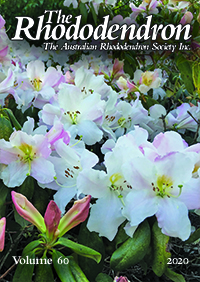 The Rhododendron